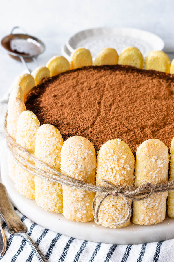 Pumpkin tiramisu with ladyfingers around it, and dusted with cocoa powder